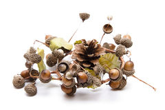 Acorns with pine cone Stock Photos