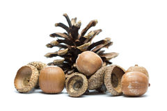Acorns and pine cone Stock Photos