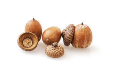 Acorns with reflection Stock Images