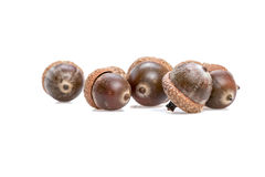 Acorns. Ripe acorns on a white background Stock Photography