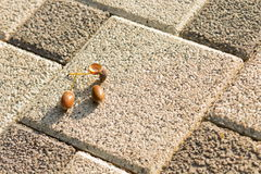 Acorns on the rough surface in the morning sun rays in autumn Royalty Free Stock Image