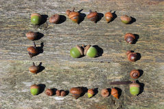 Acorns in a Square of Acorns Stock Images