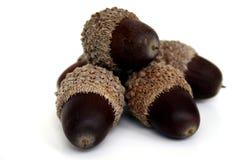 acorns stos Fotografia Stock