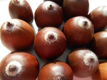 Acorns texture background. Acorns texture beautiful solor background Royalty Free Stock Image