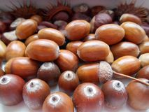 Acorns texture background Royalty Free Stock Photography