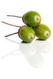 acorns trzy Fotografia Stock