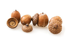 Acorns on a white background Royalty Free Stock Photo