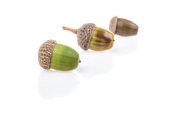 Acorns on white with reflection. Some acorns on white with reflection royalty free stock image