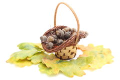 Acorns in wicker basket and oak leaves on white background Royalty Free Stock Photos