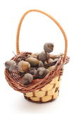 Acorns in a wicker basket on white background Royalty Free Stock Photo
