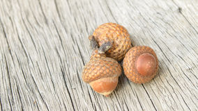 Acorns on wood background. Royalty Free Stock Photography