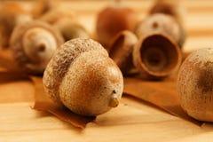 Acorns. On a wooden board Stock Photos