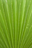 Acorus calamus Stock Photos