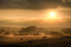 Acoss Misty Fields de la luz del sol Foto de archivo libre de regalías