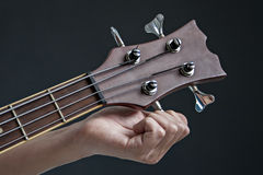 Acoustic bass Stock Image