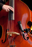 Acoustic double bass player. Plays jazz Royalty Free Stock Images