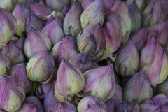Acqua blu Lily Buds Immagini Stock Libere da Diritti