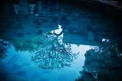 Acqua blu nella piscina e pochi budha ed albero Fotografia Stock