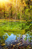 Acqua calma in foresta verde Immagine Stock Libera da Diritti