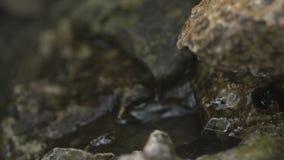Acqua che cade sulle rocce stock footage