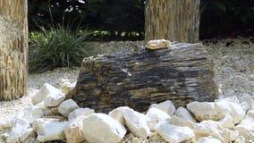 Acqua che esce da una pietra nel giardino archivi video