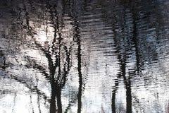 In acqua che rispecchia gli alberi Immagini Stock Libere da Diritti