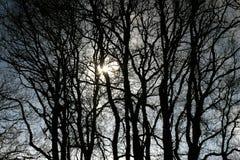 In acqua che rispecchia gli alberi Fotografia Stock