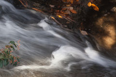 Acqua che scorre dalle foglie cadute Fotografie Stock Libere da Diritti