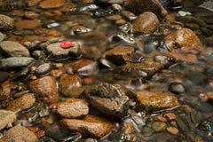 Acqua che si muove nella corrente - una foglia rossa immagini stock libere da diritti