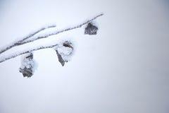 Acqua congelata su un ramo Immagini Stock