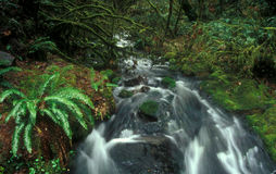 Acqua corrente della foresta dell'Oregon Fotografie Stock