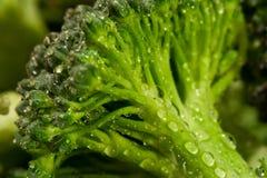 Acqua del broccolo Immagine Stock Libera da Diritti