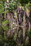 Acqua del lago e palme verdi nella giungla tropicale Acqua di riflessione di specchio Isola tropicale Mauritius della foresta del Fotografie Stock