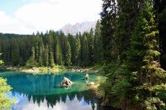 Acqua del lago turquoise in legno di pini Fotografia Stock Libera da Diritti