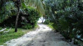 Acqua del lato della spiaggia, sabbia, via degli alberi immagini stock libere da diritti