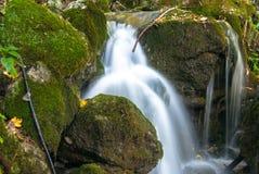 Acqua del luppolo del luppolo Fotografie Stock