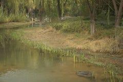 Acqua del paesaggio Fotografie Stock