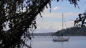 Acqua della barca a vela ed il litorale del lago Washington stock footage