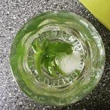Acqua della menta Fotografie Stock