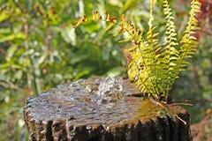 Acqua della natura Fotografia Stock Libera da Diritti