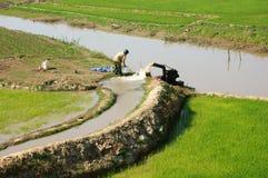 Acqua della pompa dell'agricoltore al giacimento del riso Fotografia Stock