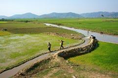 Acqua della pompa dell'agricoltore al vasto giacimento del riso Immagini Stock Libere da Diritti