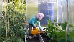 Acqua della ragazza del bambino le piante nella serra con acqua dall'annaffiatoio archivi video