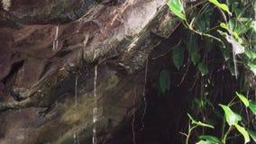 Acqua della sgocciolatura in caverna stock footage