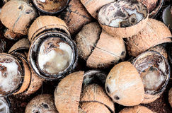 Acqua di cocco del fondo della pelliccia di Brown Fotografia Stock Libera da Diritti