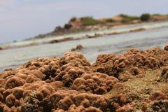 Acqua di Coral Shallow in Tailandia fotografia stock