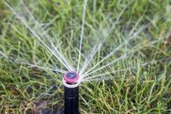 Acqua di dispersione della testa dell'irrigatore automatica su erba Fotografia Stock