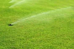 Acqua di fonte del giardino dell'erba in una riga Immagini Stock Libere da Diritti