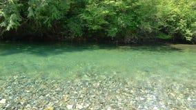 Acqua di Green River Immagini Stock