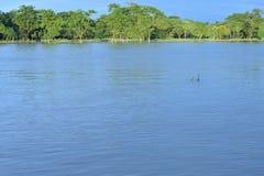 Acqua di inondazione nell'inondazione immagini stock libere da diritti